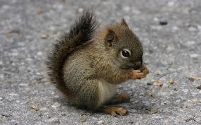 I love squirrels!