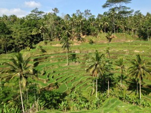 Balinese rice terrace