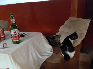 Gili Trewangan (Gili T) bar - and cats