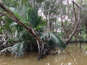 Brunei river - hunting for Dutchman monkeys
